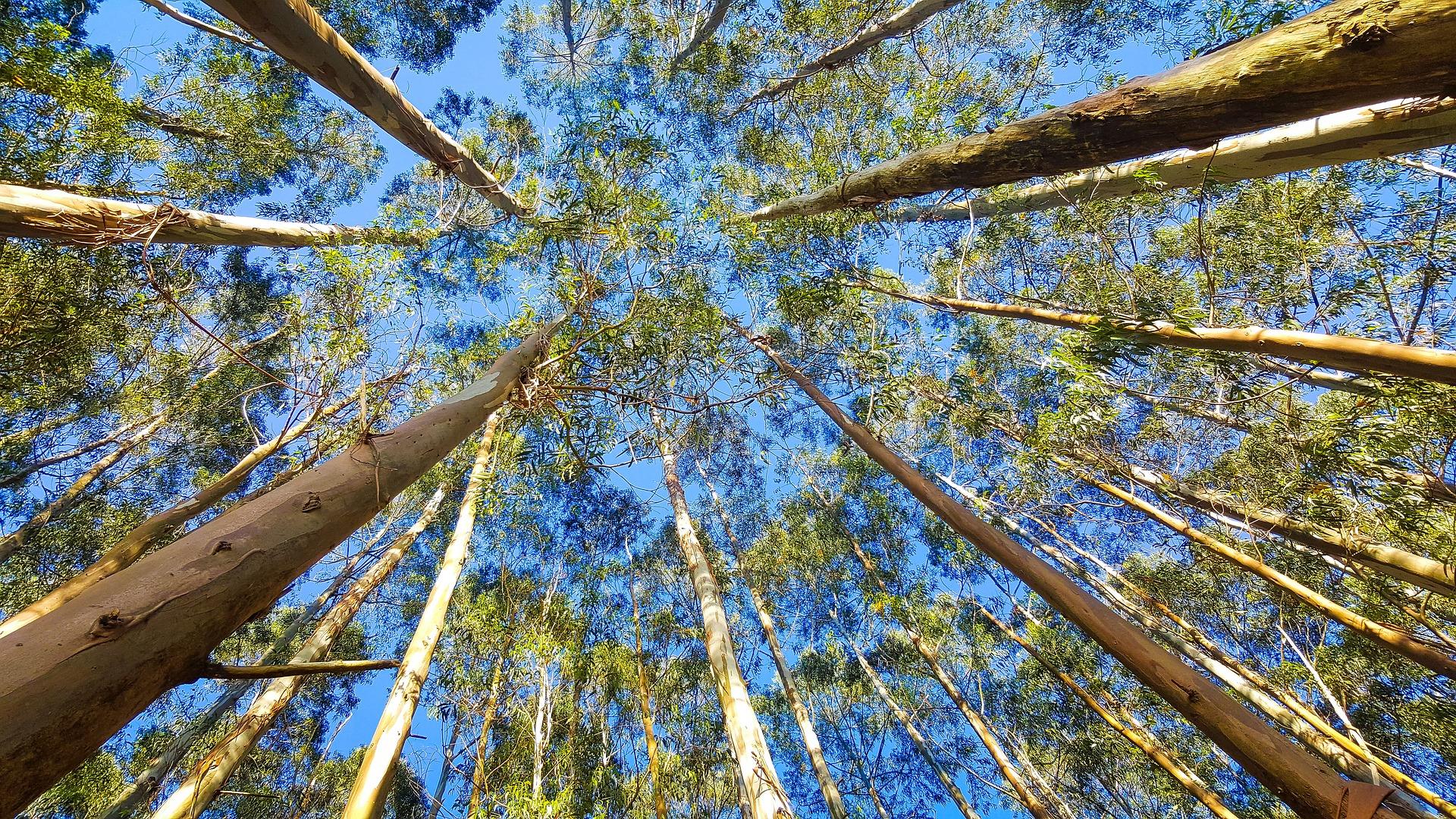 Código Florestal e as compensações econômicas por serviços ambientais