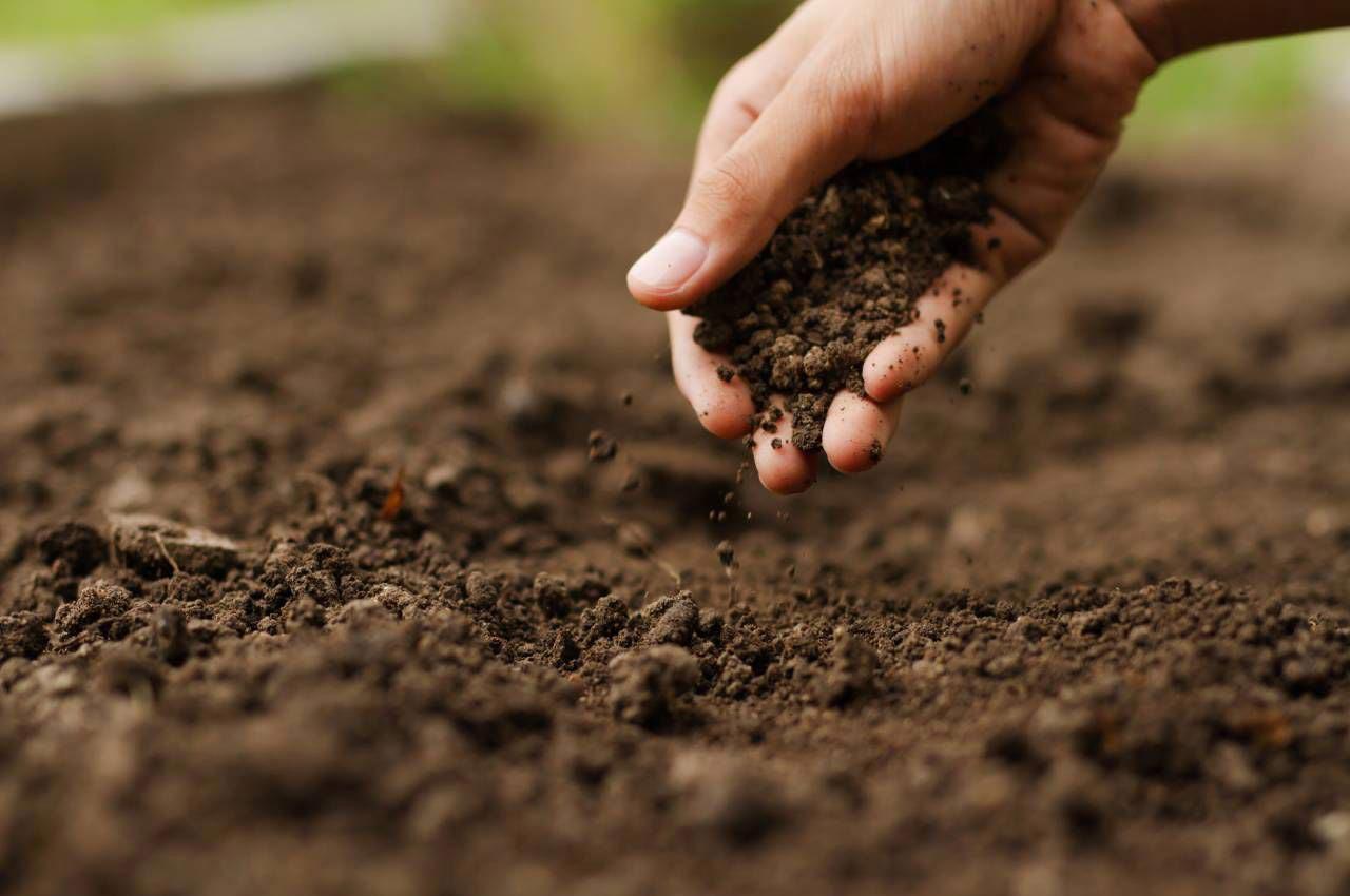 Organossolos: a importância agronômica e ambiental para o Rio de Janeiro