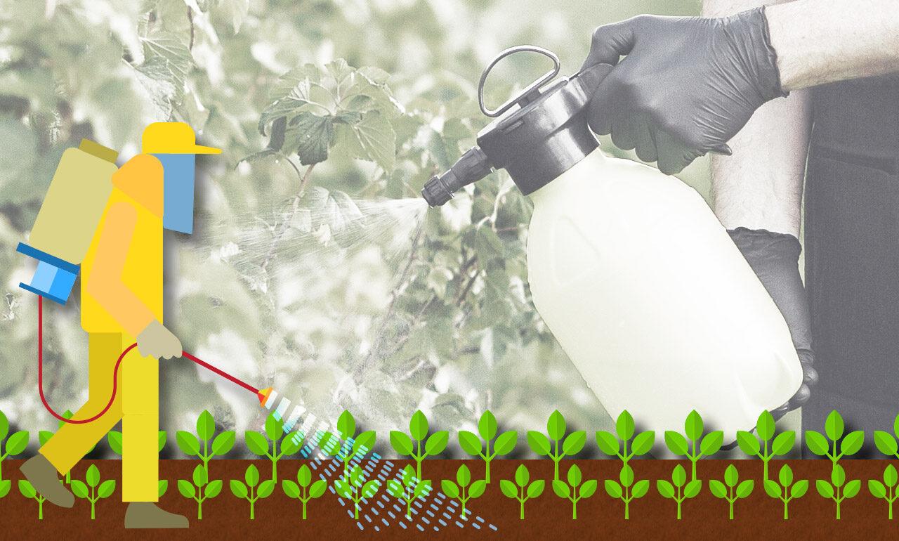 Importância da capacitação de produtores rurais quanto ao uso de agrotóxicos para minimizar os danos à população e ao meio ambiente